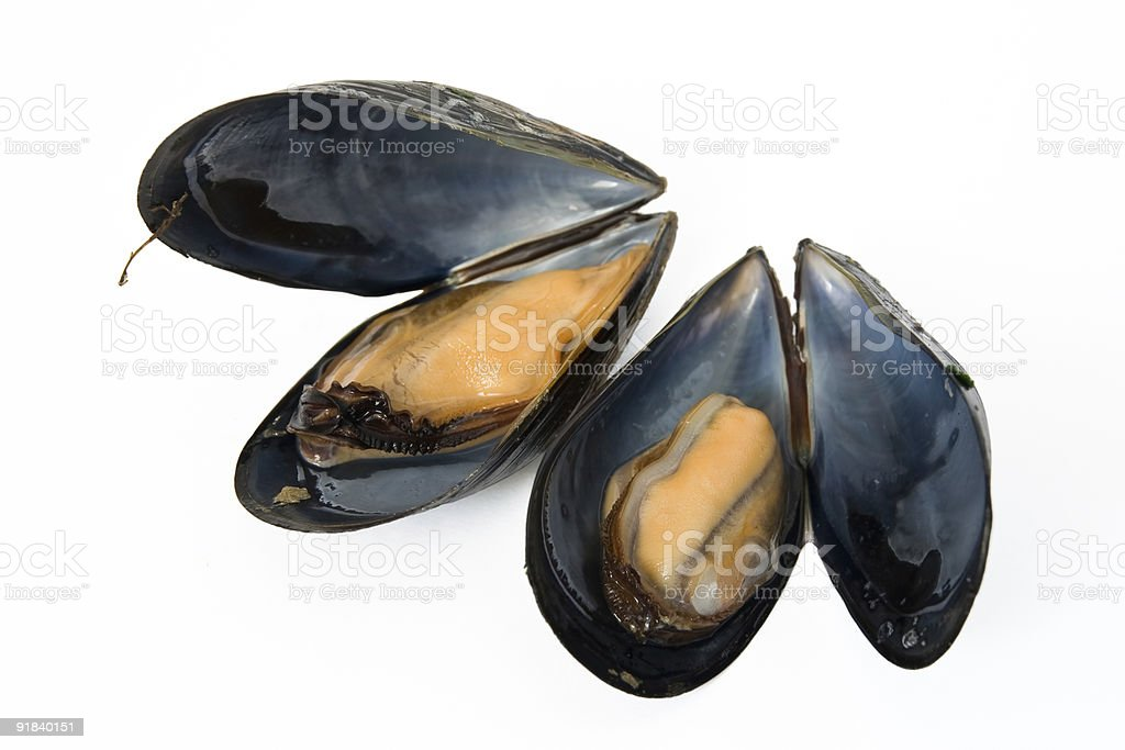 two boiled mussels royalty-free stock photo
