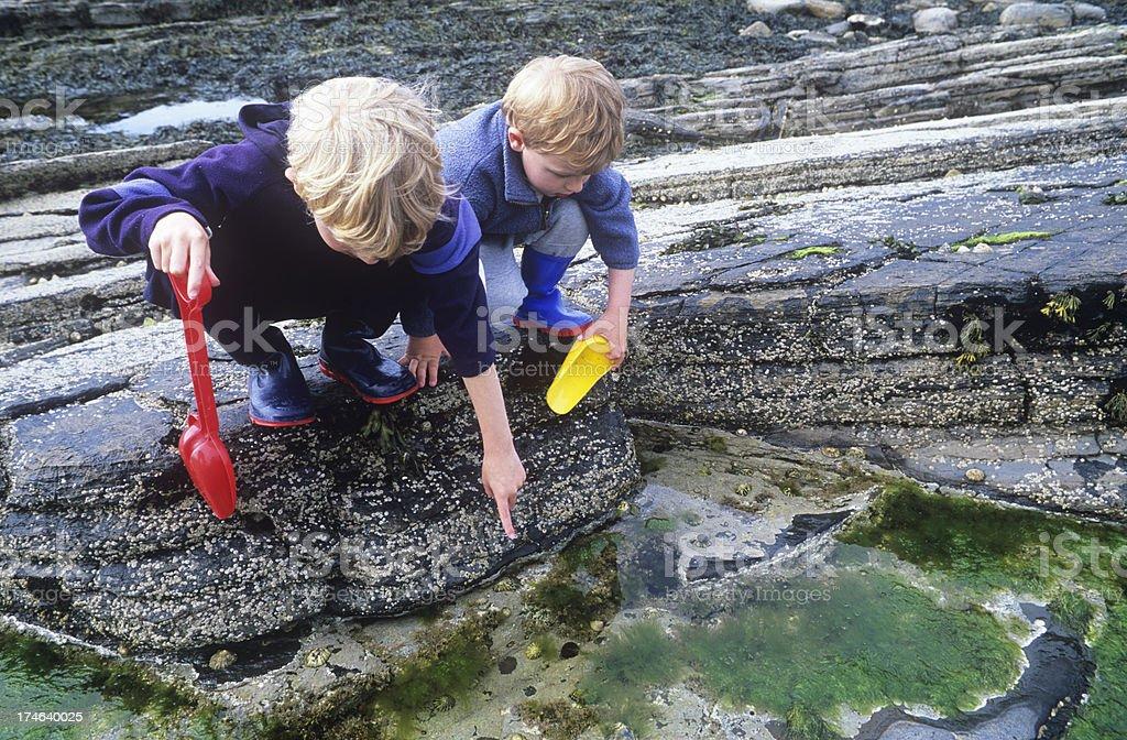 Two boys exploring rockpools royalty-free stock photo