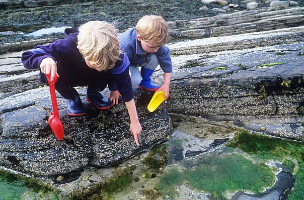 Two boys exploring rockpools stock photo