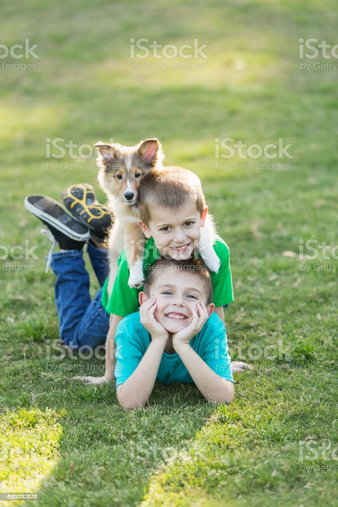 Two boys lying on grass with sheltie puppy in stack royalty-free stock photo