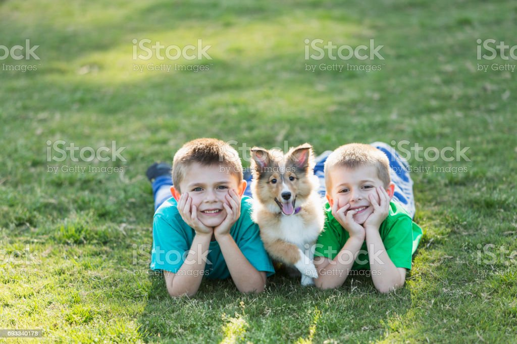 Two boys lying on grass with sheltie puppy stock photo