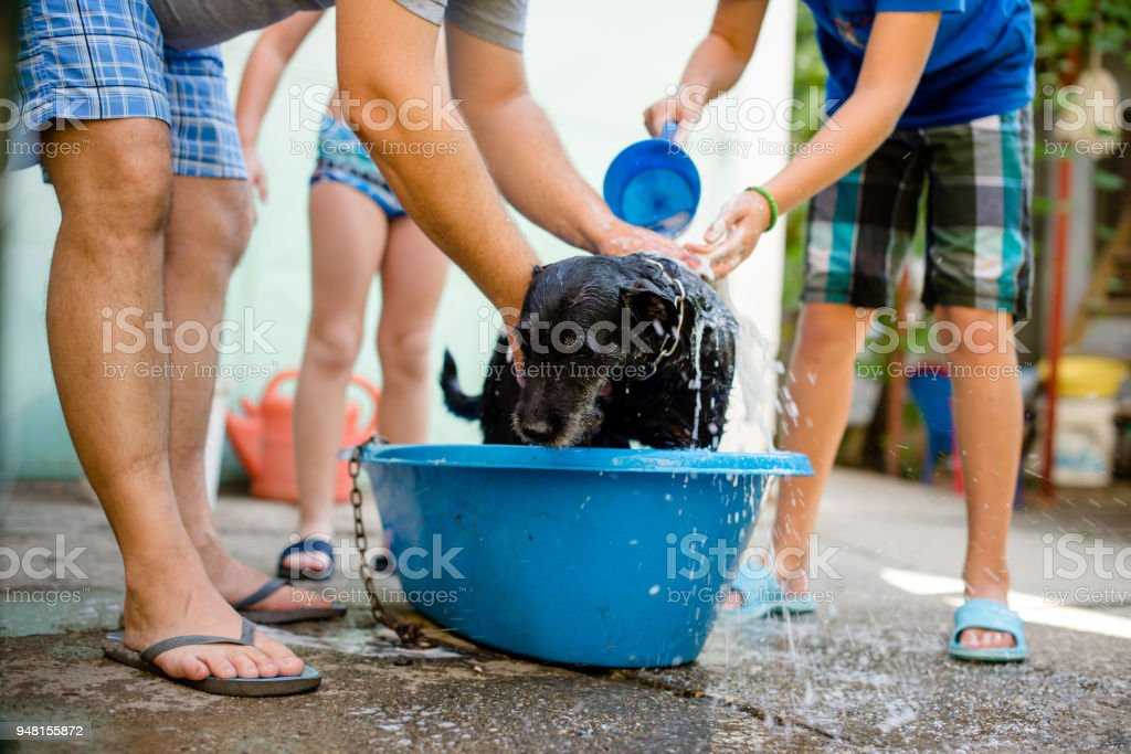 Two boys with their father washing their puppy stock photo