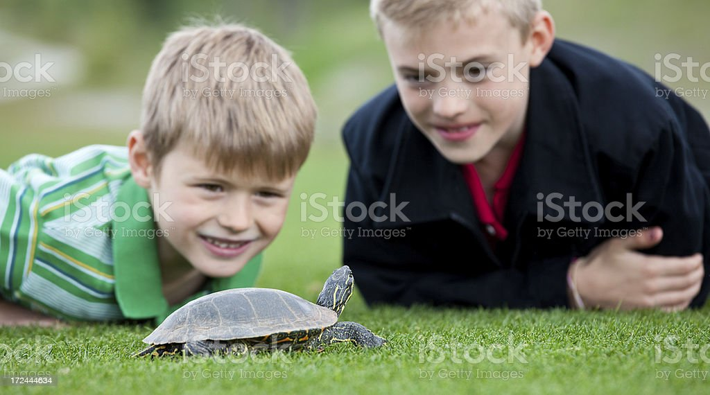 Two Boys with Turtle stock photo