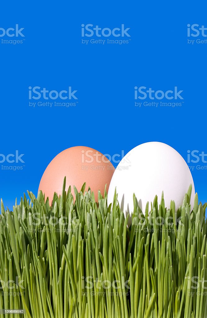 Two Brown and White Eggs, Nestled In the Green Grass royalty-free stock photo