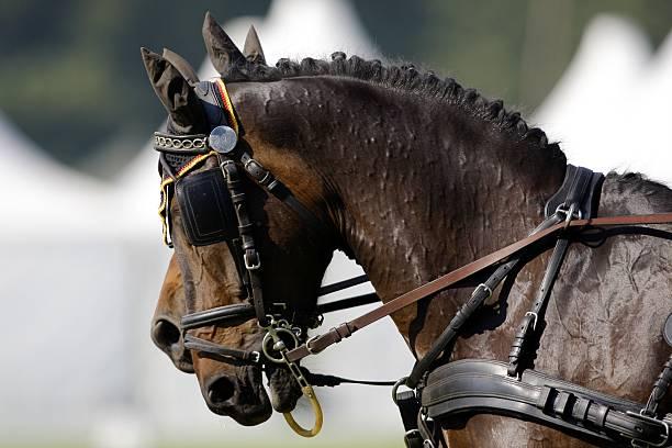 Brun deux têtes de chevaux - Photo