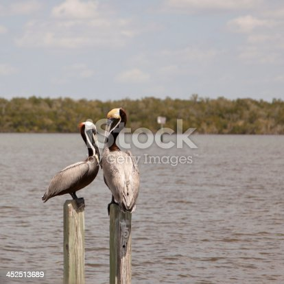This is a square photo of two Brown Pelicans sitting on two posts and looking at each other.