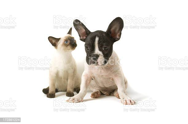 Two buddies picture id172351224?b=1&k=6&m=172351224&s=612x612&h=lfscdkboeqpmav 09farxjm2ljy weutlpoosdlbms8=
