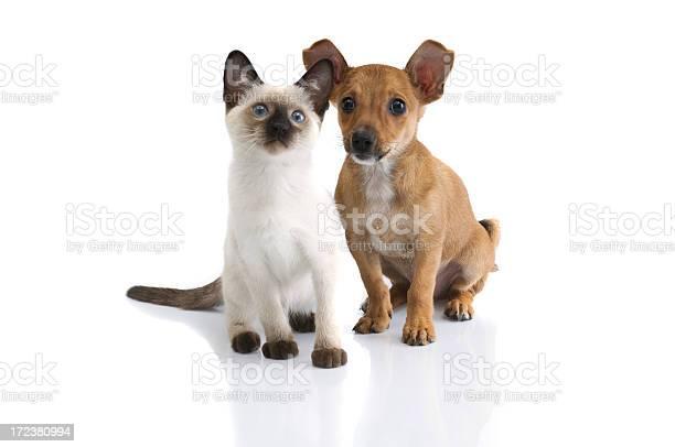 Two buddies picture id172380994?b=1&k=6&m=172380994&s=612x612&h=0 48n5wdeyvyray ihzuaw byhwnkmdlvjpq7rs6z1q=