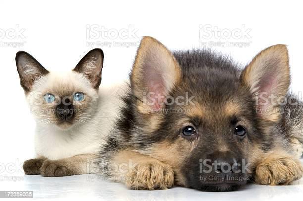 Two buddies picture id172389035?b=1&k=6&m=172389035&s=612x612&h=d9f1pnnbrthzwkadinl27 1 jyn232gv eb6emssqro=