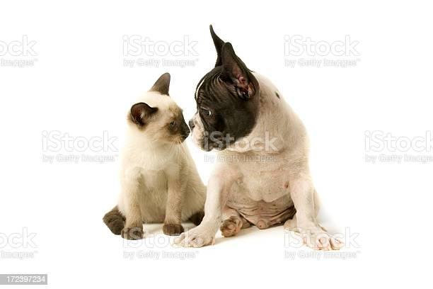 Two buddies picture id172397234?b=1&k=6&m=172397234&s=612x612&h=7k 4kkqqdqx00grlwxblanotth hkft8yjxh30wrcyq=