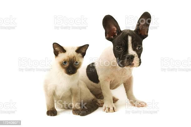 Two buddies picture id172409071?b=1&k=6&m=172409071&s=612x612&h=lnlcc78ngmfdklcdbakz5ky2glfrlztlj7jftld8fhe=