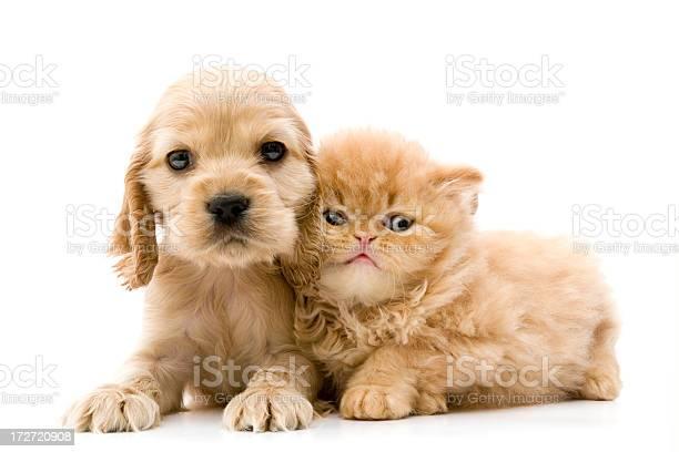 Two buddies picture id172720908?b=1&k=6&m=172720908&s=612x612&h=f1huxvi4eew7wez8fdyxkizdy tvzbcjlrxvvrebuuo=
