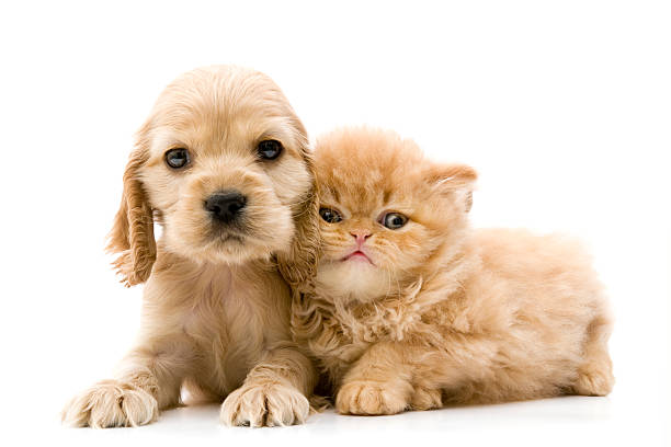 two buddies - kitten stock photos and pictures