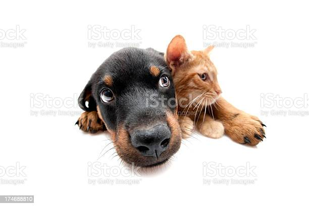 Two buddies picture id174688810?b=1&k=6&m=174688810&s=612x612&h=pndshcfhb0mlf09v8buhv5dncxpaf1tcjcnjs3chmrg=