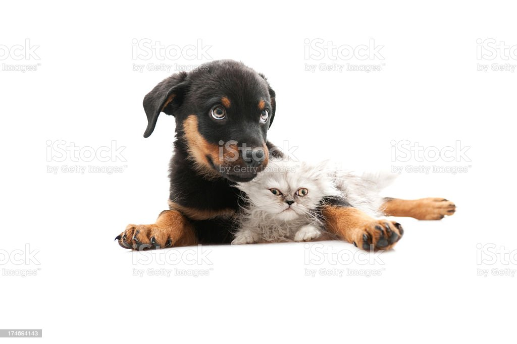 two buddies royalty-free stock photo