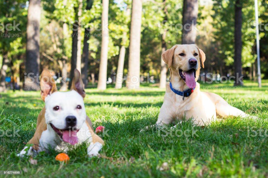 Two buddies stock photo