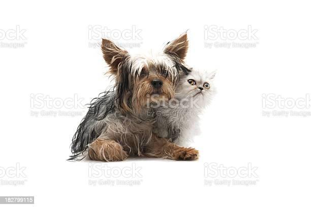 Two buddy picture id182799115?b=1&k=6&m=182799115&s=612x612&h=xiitppvx3ssechb9rch5iksn7rl0rmc8ce0ixkiypyc=
