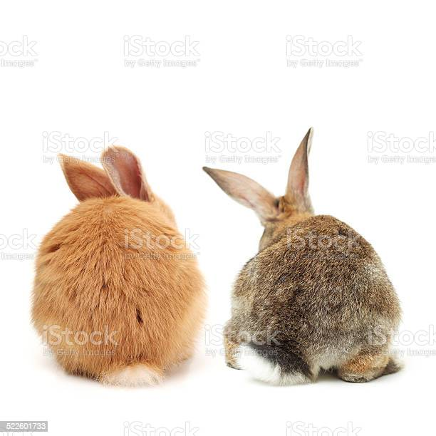 Two bunnies rear view shot picture id522601733?b=1&k=6&m=522601733&s=612x612&h=2gbxnu6x 6 gysklqsmfqc5dyk2gcskxjim1kgy1d4w=