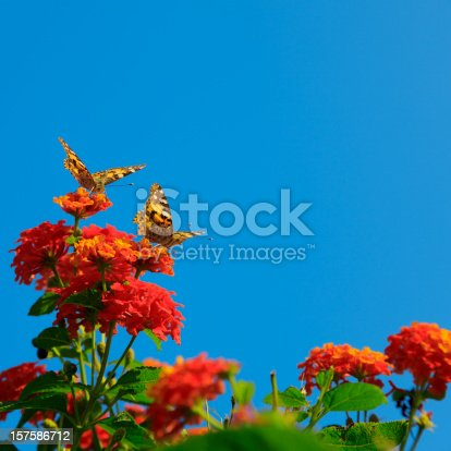 istock two butterfly on flowers 157586712