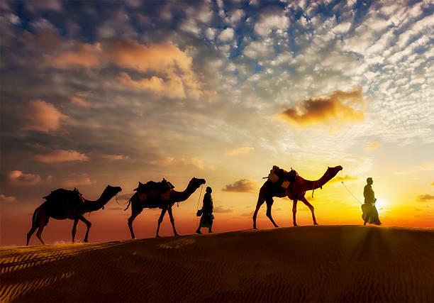 camello cameleers dos conductores con camellos en las dunas de de thar - camello fotografías e imágenes de stock