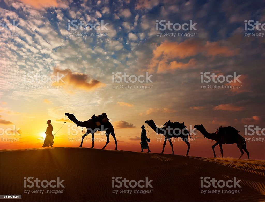 Two cameleers camel drivers with camels in dunes stock photo
