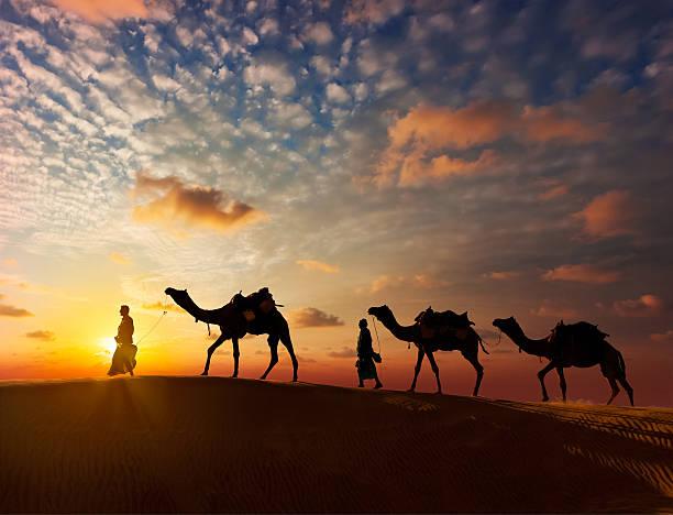 dois camelos cameleers motoristas com camelos nas dunas - viagem pela vida selvagem - fotografias e filmes do acervo