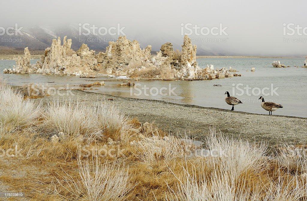 Two canadian gooses on Mono Lake, California, USA royalty-free stock photo
