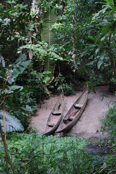 Two canoes in a rain forest. stock photo