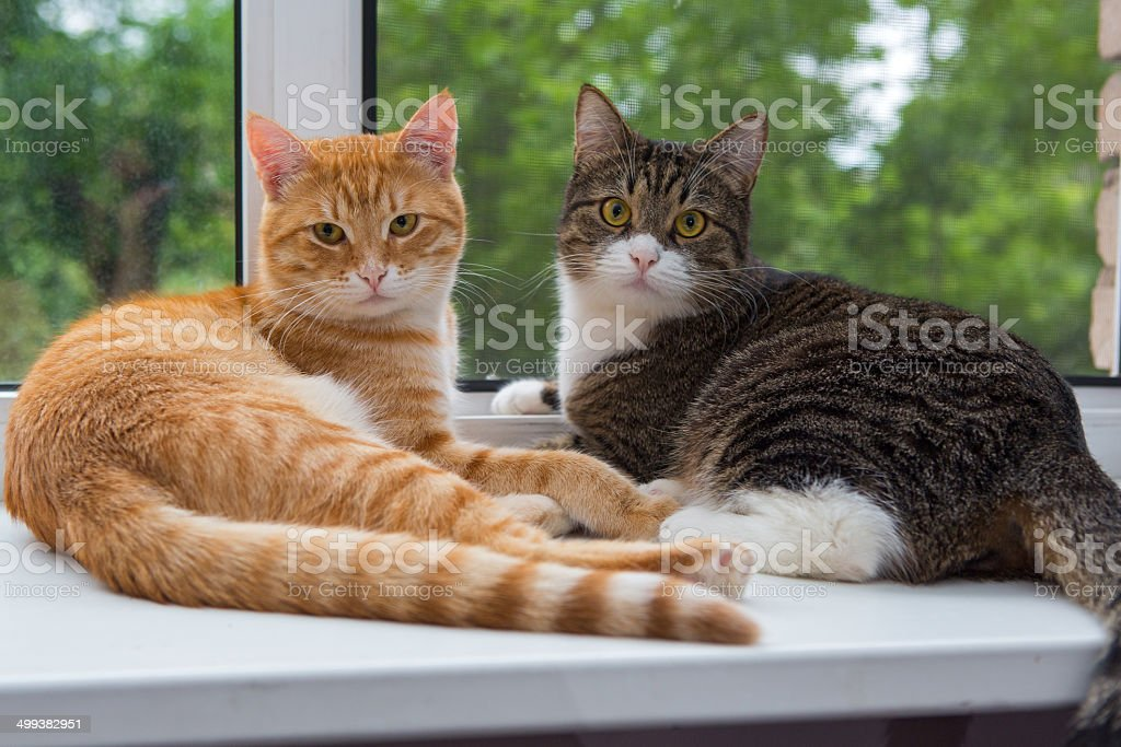 Two cat sitting on the window sill stock photo