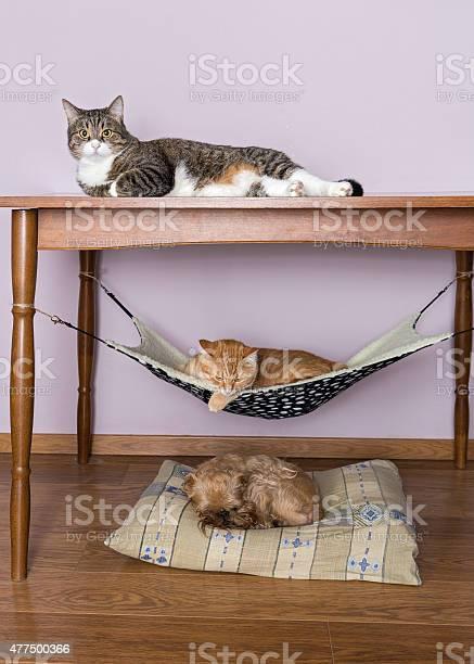 Two cats and a dog sleeping together picture id477500366?b=1&k=6&m=477500366&s=612x612&h=pkowhvk1 1ym5jkvykc3yirzbn6pxvdl mfstxh2njg=