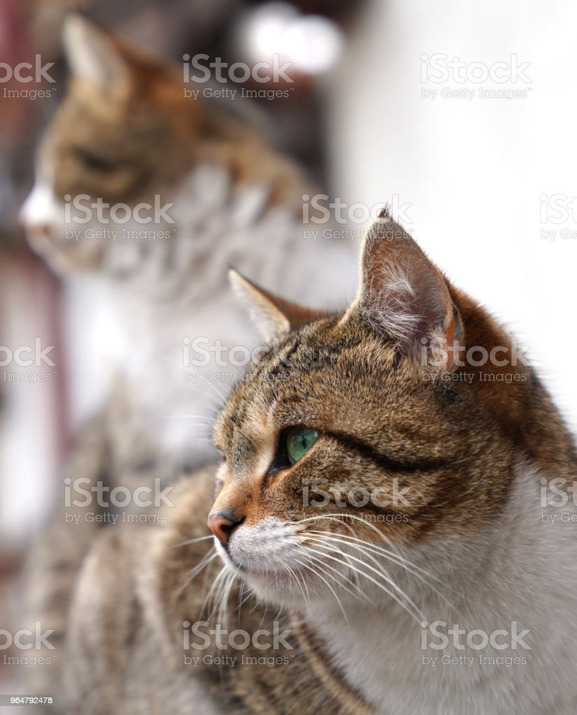 Two cats are looking at one direction royalty-free stock photo