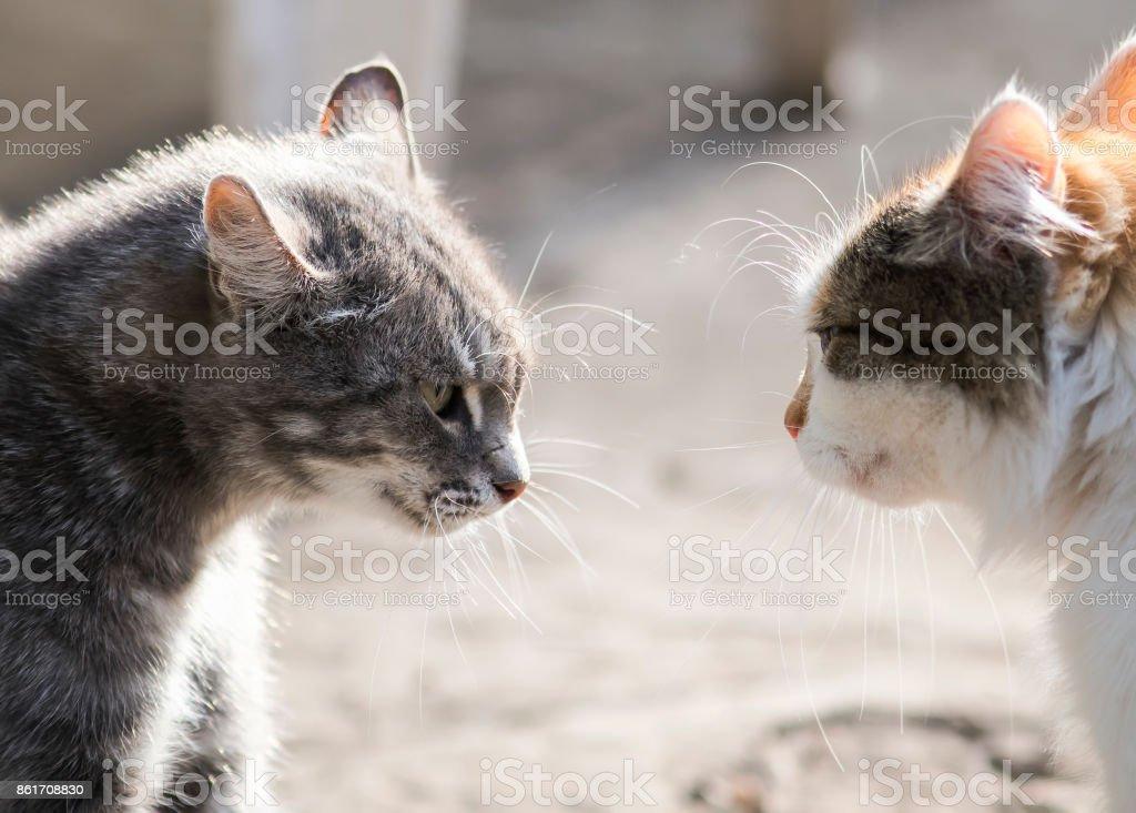 katzen miauen böse