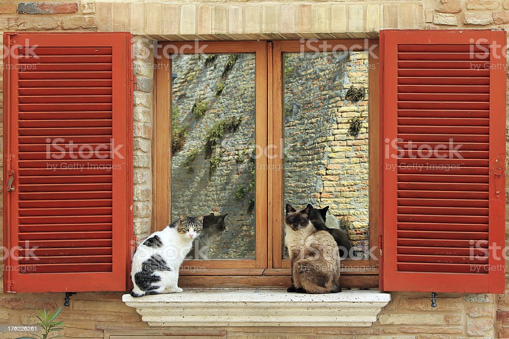 Two cats at the window royalty-free stock photo