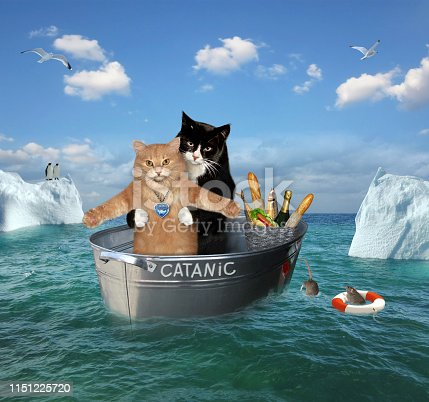 The two brave cats are drifting in the steel washtub among the icebergsin the sea. Their ship is called Catanic.