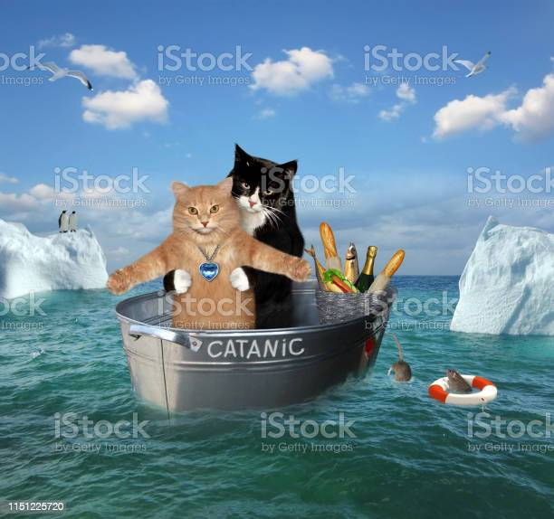Two cats drift in a washtub picture id1151225720?b=1&k=6&m=1151225720&s=612x612&h=nz847zay5frhffxuplbvycu4hhulnydsy3k8u egy90=