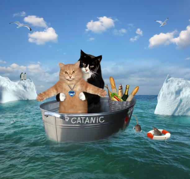 two cats drift in a washtub - bacinella metallica foto e immagini stock