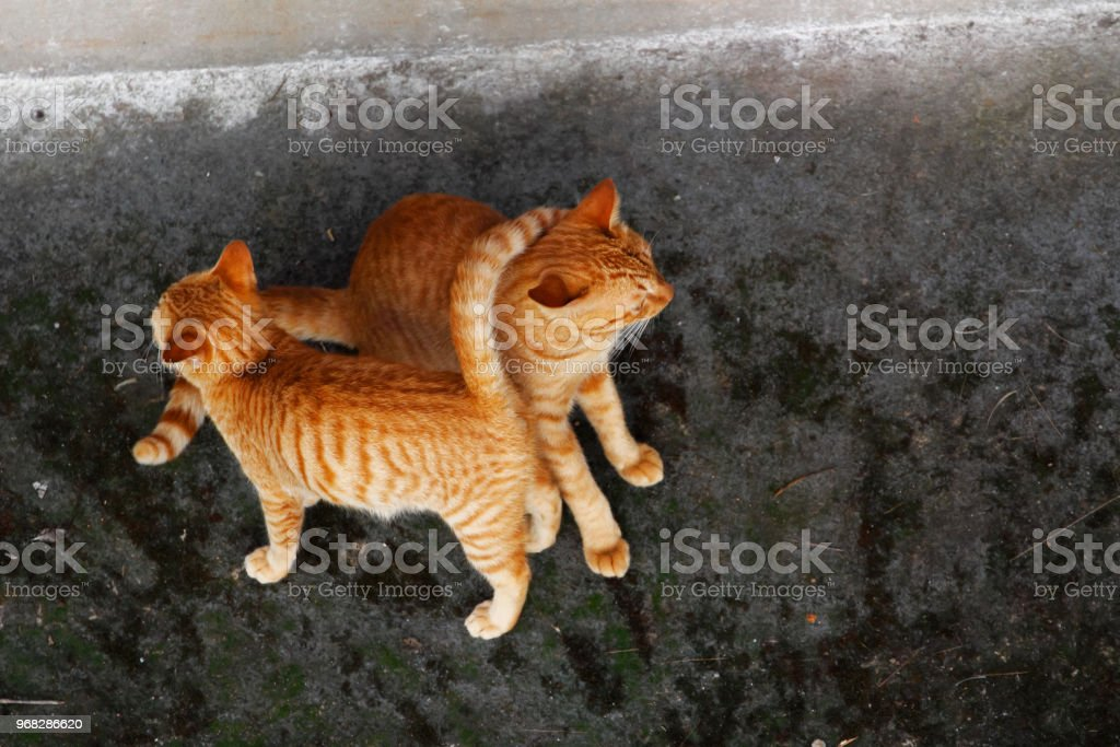 Two cats from above stock photo