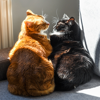 Two cats hugging on the sofa on a sunny day.