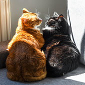 istock Two cats hugging on the sofa on a sunny day. 1307219200