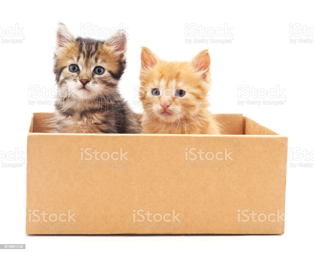 Two cats in a box. royalty-free stock photo