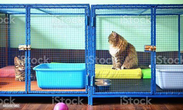 Two cats in cat shelter picture id485592980?b=1&k=6&m=485592980&s=612x612&h=y2zxfolmq9sosrhu5k6y6n97tsvth 48x1y53aivzri=