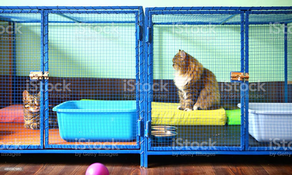 Two cats in cat shelter. stock photo
