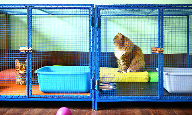 Two cats in cat shelter. Two brown domestic cats resting in cages at cat shelter. This is actually cat sitter mansion where these cats stay while their owner are on vacation. Cats have all the privileges as that do at home. sheltering stock pictures, royalty-free photos & images