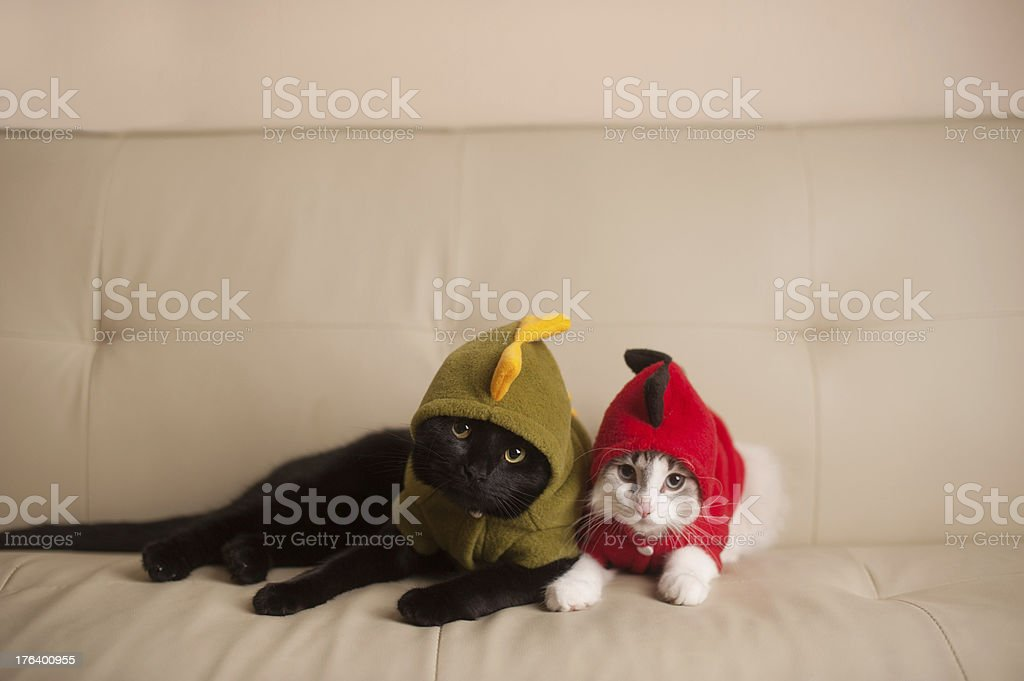 Two Cats in Dinosaur Costumes stock photo