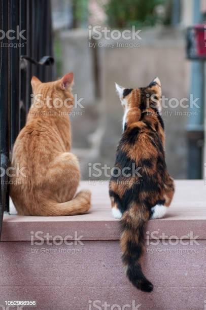 Two cats in outdoor looking away in the street picture id1052966956?b=1&k=6&m=1052966956&s=612x612&h=m2eki8kiwz77cxbu3emt3vdwctdbby wqj2mrqlbh74=