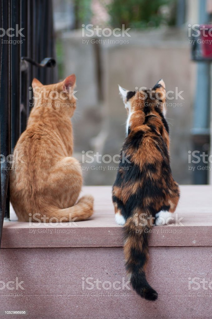 two cats in outdoor looking away in the street stock photo