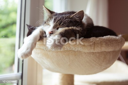 two cats rest very close together