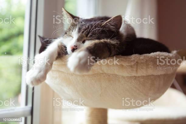 Two cats in smal hammock picture id1010539662?b=1&k=6&m=1010539662&s=612x612&h=yjdzadb9uaqwcdmfx9gp6fsvumkwkh2i vitn4ulass=