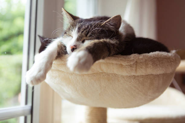 two cats in smal hammock - cat stock pictures, royalty-free photos & images