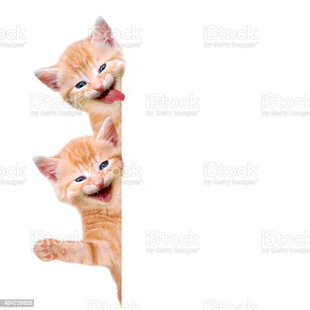 Two cats laughing and waving picture id494239805?b=1&k=6&m=494239805&s=612x612&h=m4hsvqiaw53hyhrg5ioaz 4e9xo1od9 ktv4kkira i=